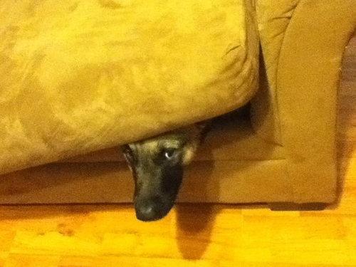 隠れるのが下手な犬たち07