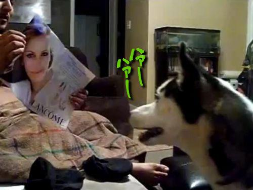 ジュリアロバーツが怖い犬