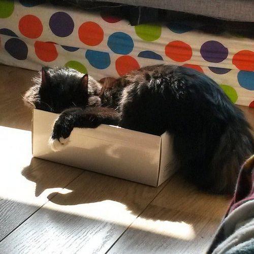 箱入り猫18