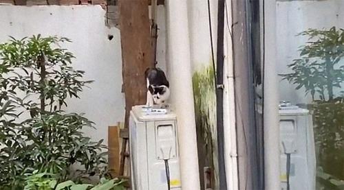 困り顔の猫04