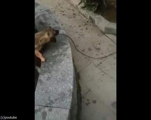 溺れている猫を救出する犬07