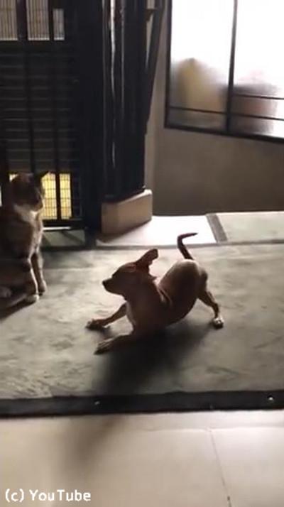 犬と猫のテンションの違い01
