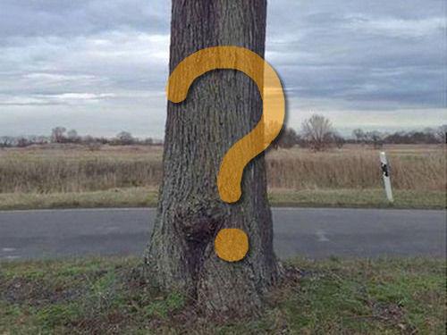 大木を宙に浮かべる方法00