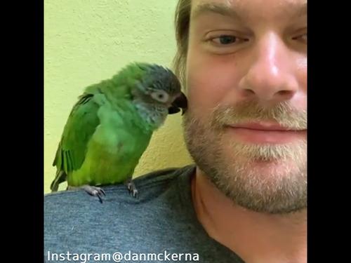 鳥にキスしたら…愛情表現が返ってきたっ!00