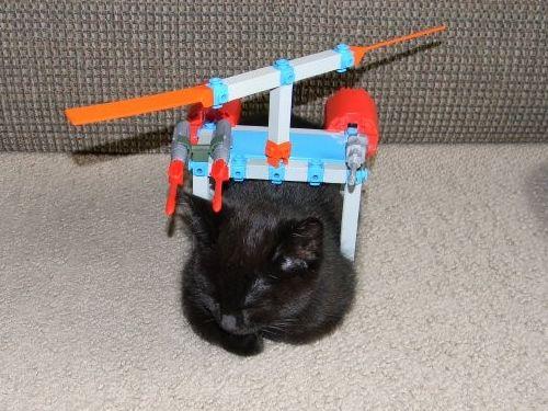 猫と乗り物12