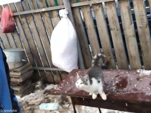 飼い主さんの肩に跳び乗ろうとした猫02