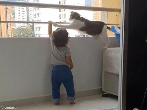 幼児を守る猫02