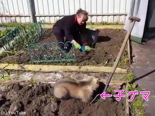 畑仕事を手伝う子グマ00