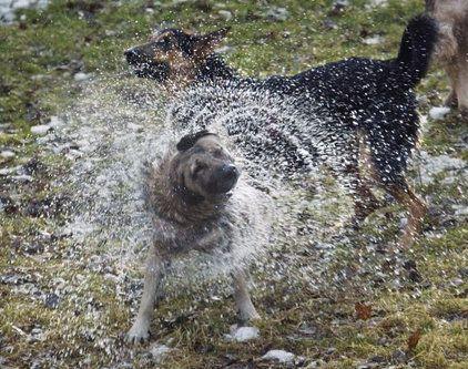 ペット濡れる前と後12