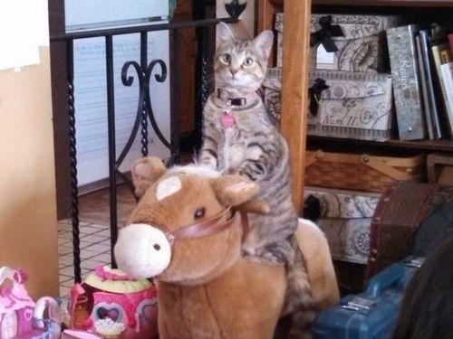 うちの猫の遊び方02