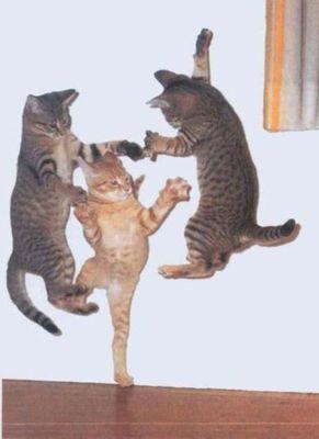 ハッピバースデーな猫13