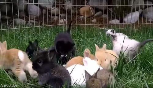 子猫と子ウサギ02