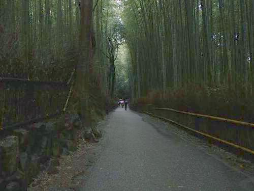 嵐山の竹林04