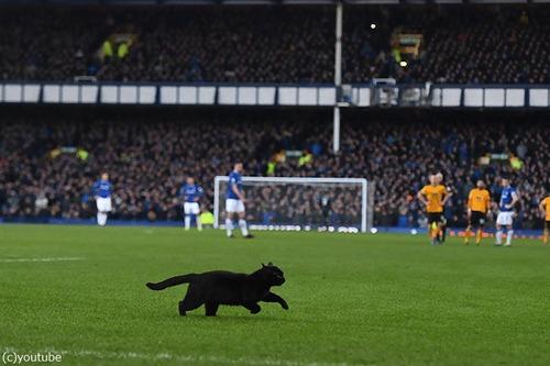 サッカーのピッチに黒猫03