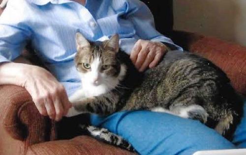 おばあちゃんと猫、同日に天国へ召される02