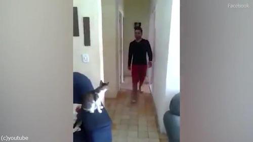 ハイタッチ猫01