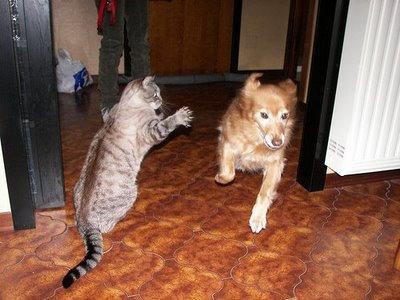 01不意打ちする猫たち