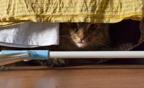 猫は見ている05