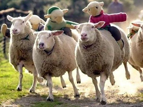 羊飼いの楽しみ00