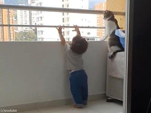 幼児を守る猫00