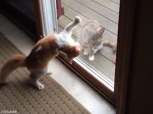ハイテンションの猫と冷静な猫06