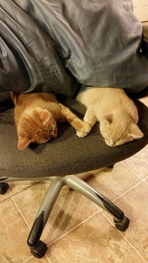 手をつないで寝る子猫たち01