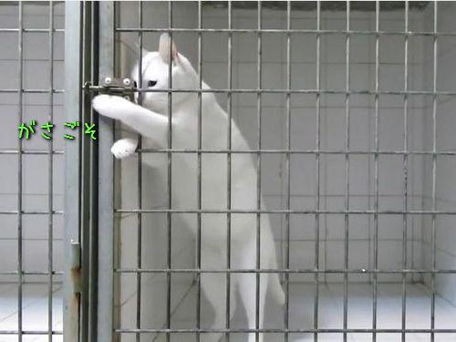 脱獄が得意な猫00