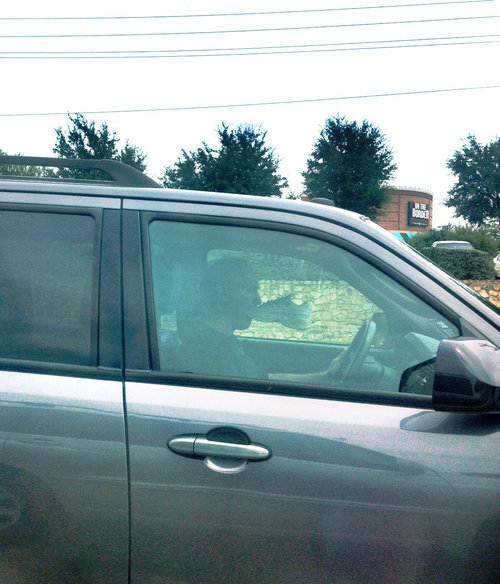 08運転中に道路で出くわす突飛ないろいろ