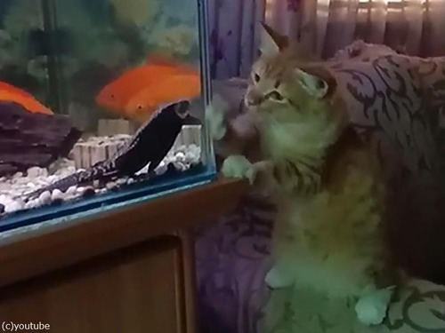 猫vs水槽03