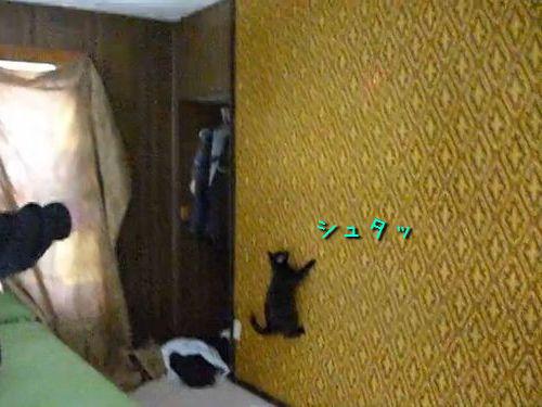 壁を自在に登る猫00