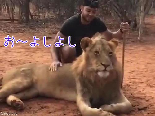 ライオンのクシャミ00