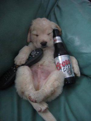 寝てる犬05