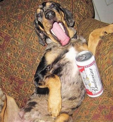 ビール大好き犬06