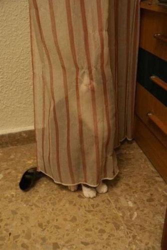 03かくれんぼする猫たち