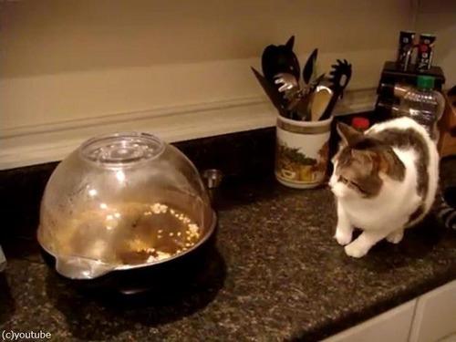 猫とポップコーン02