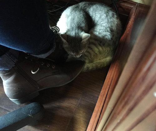 野良猫が家族以上の存在に08