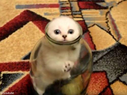 ビンの中の子猫01