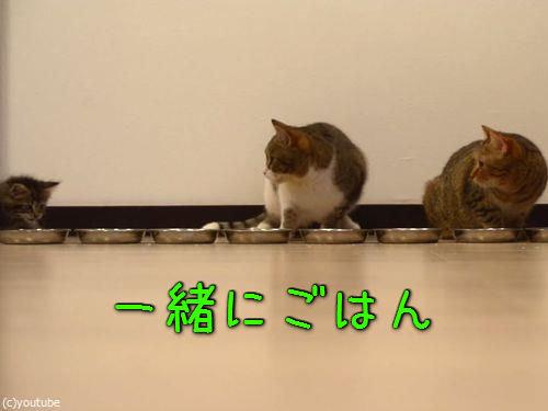 猫10匹が並んで食事00