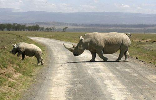 道路を渡る動物19