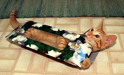 狭い所に入りたがる猫06