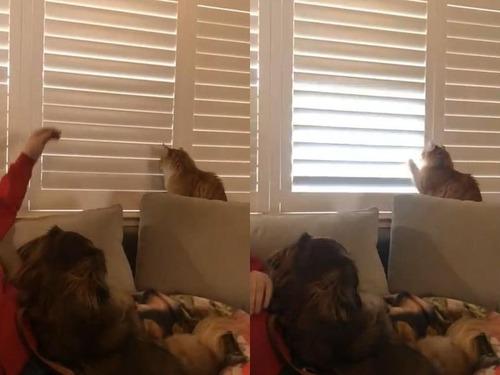 猫、お父さんに反抗する02