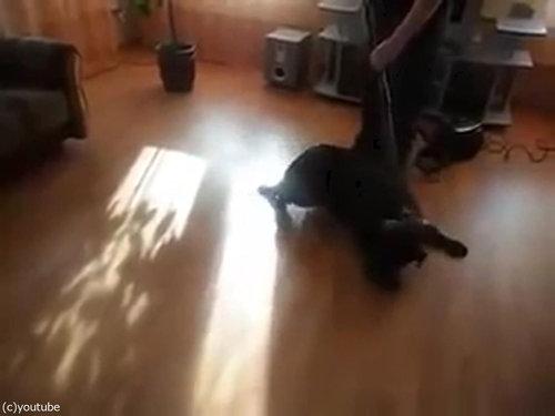 掃除機ラブな犬03
