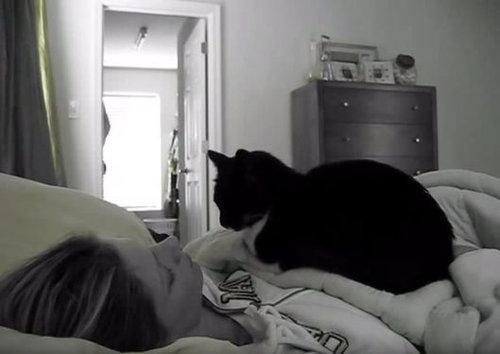 起こしてくれる猫06