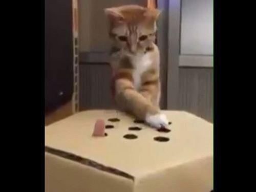 猫が「モグラたたき」01