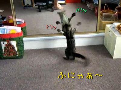 鏡と対決する猫