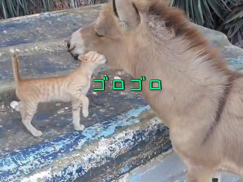 子猫とロバの友情00