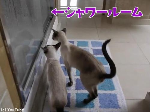 ご主人のシャワータイムに猫は…00