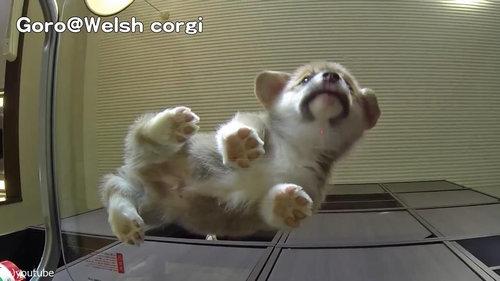 子犬をガラステーブルの下から見る05