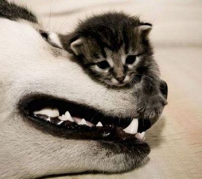 動物枕12