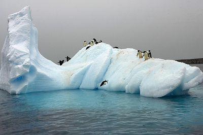 ペンギン19